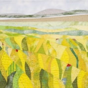 Yellow Field, Berneray